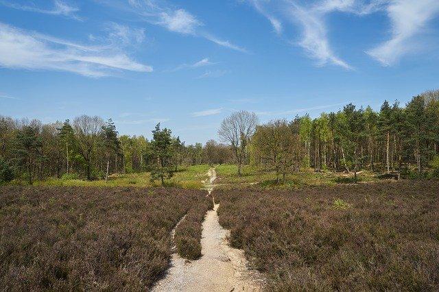 De Kaapse bossen in Utrecht