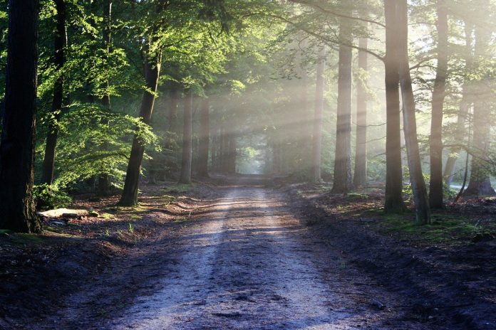 mooiste bossen nederland